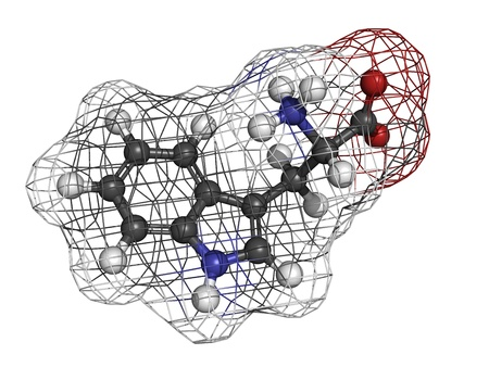 hydrogen: Tryptophan (Trp, W) amino acid, molecular model. Amino acids are the building blocks of all proteins. Atoms are represented as spheres with conventional color coding: hydrogen (white), carbon (grey), oxygen (red), nitrogen (blue)
