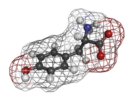 tyr: Tyrosine (Tyr, Y) amino acid, molecular model. Amino acids are the building blocks of all proteins. Atoms are represented as spheres with conventional color coding: hydrogen (white), carbon (grey), oxygen (red), nitrogen (blue) Stock Photo