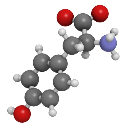 norepinephrine: Tyrosine (Tyr, Y) amino acid, molecular model. Amino acids are the building blocks of all proteins. Atoms are represented as spheres with conventional color coding: hydrogen (white), carbon (grey), oxygen (red), nitrogen (blue) Stock Photo