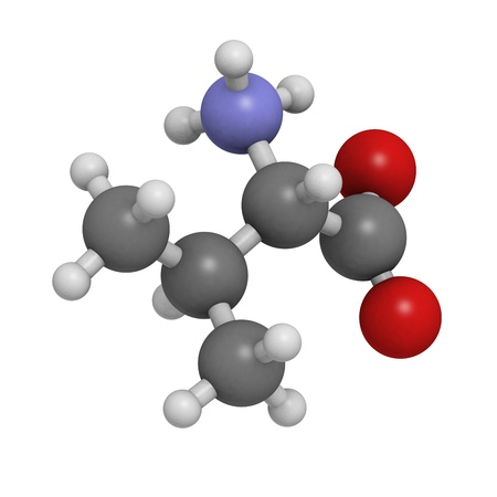 biosynthesis: Valine (Val, V) amino acid, molecular model. Amino acids are the building blocks of all proteins. Atoms are represented as spheres with conventional color coding: hydrogen (white), carbon (grey), oxygen (red), nitrogen (blue)