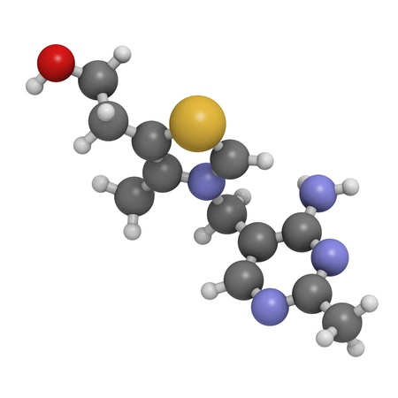 encephalopathy: Vitamin B1 (thiamine), molecular model. Atoms are represented as spheres with conventional color coding: hydrogen (white), carbon (grey), oxygen (red), sulfur (yellow), nitrogen (blue)