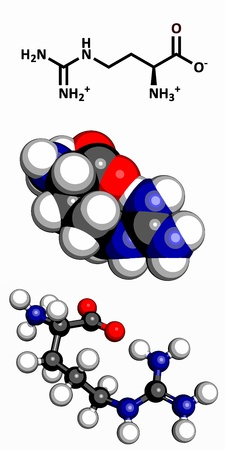 synthesis: Arginine  Arg, R  amino acid, molecular model  Amino acids are the building blocks of all proteins  Atoms are represented as spheres with conventional color coding  hydrogen  white , carbon  grey , oxygen  red , nitrogen  blue  Illustration