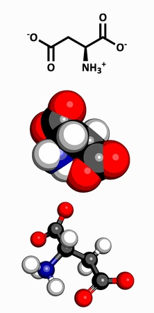 asp: Aspartic acid  Asp, D, aspartate  amino acid, molecular model  Amino acids are the building blocks of all proteins  Atoms are represented as spheres with conventional color coding  hydrogen  white , carbon  grey , oxygen  red , nitrogen  blue