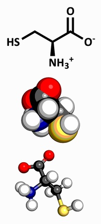 nitrogen: Cysteine  Cys, C  amino acid, molecular model  Amino acids are the building blocks of all proteins  Atoms are represented as spheres with conventional color coding  hydrogen  white , carbon  grey , oxygen  red , nitrogen  blue , sulfur  yellow  Illustration