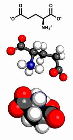 glutamate: Glutamic acid  Glu, E, glutamate  amino acid and neurotransmitter, molecular model  Amino acids are the building blocks of all proteins  Glutamate is also responsible for umami flavor  Atoms are represented as spheres with conventional color coding  hydro