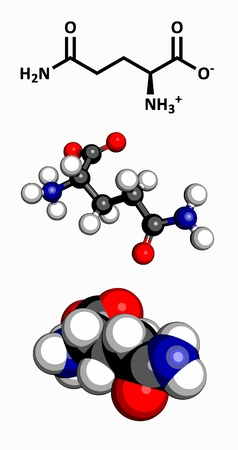 ribosome: Glutamine  Gln, Q  amino acid, molecular model  Amino acids are the building blocks of all proteins  Atoms are represented as spheres with conventional color coding  hydrogen  white , carbon  grey , oxygen  red , nitrogen  blue