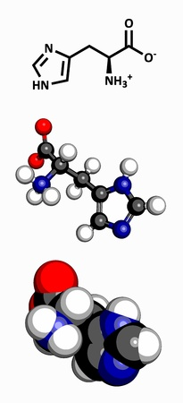 biosynthesis: Histidine  His, H  amino acid, molecular model  Amino acids are the building blocks of all proteins  Atoms are represented as spheres with conventional color coding  hydrogen  white , carbon  grey , oxygen  red , nitrogen  blue