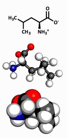 leu: Leucine  Leu, L  amino acid, molecular model  Amino acids are the building blocks of all proteins  Atoms are represented as spheres with conventional color coding  hydrogen  white , carbon  grey , oxygen  red , nitrogen  blue  Illustration