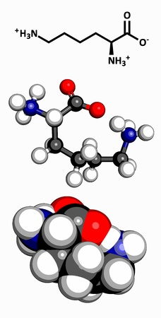 synthesis: Lysine  Lys, K  amino acid, molecular model  Amino acids are the building blocks of all proteins  Atoms are represented as spheres with conventional color coding  hydrogen  white , carbon  grey , oxygen  red , nitrogen  blue