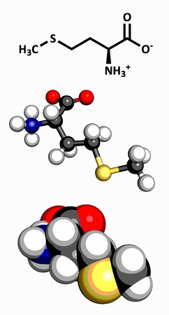 Methionine  Met, M  amino acid, molecular model  Amino acids are the building blocks of all proteins  Atoms are represented as spheres with conventional color coding  hydrogen  white , carbon  grey , oxygen  red , nitrogen  blue , sulfur  yellow  Vector