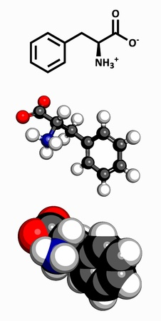 hydrophobic: Phenylalanine  Phe, F  amino acid, molecular model  Amino acids are the building blocks of all proteins  Atoms are represented as spheres with conventional color coding  hydrogen  white , carbon  grey , oxygen  red , nitrogen  blue