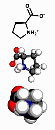 proline: Proline  Pro, P  amino acid, molecular model  Amino acids are the building blocks of all proteins  Atoms are represented as spheres with conventional color coding  hydrogen  white , carbon  grey , oxygen  red , nitrogen  blue