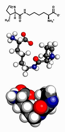nitrogen: Pyrrolysine  Pyl, O  amino acid, molecular model  Amino acids are the building blocks of all proteins  Atoms are represented as spheres with conventional color coding  hydrogen  white , carbon  grey , oxygen  red , nitrogen  blue