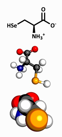 sec: Selenocysteine  Sec, U  amino acid, molecular model  Amino acids are the building blocks of all proteins  Atoms are represented as spheres with conventional color coding  hydrogen  white , carbon  grey , oxygen  red , nitrogen  blue , selenium  pink