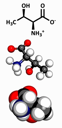 nitrogen: Threonine  Thr, T  amino acid, molecular model  Amino acids are the building blocks of all proteins  Atoms are represented as spheres with conventional color coding  hydrogen  white , carbon  grey , oxygen  red , nitrogen  blue  Illustration