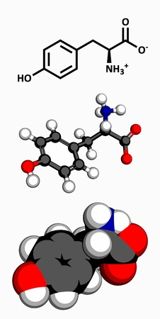 Tyrosine  Tyr, Y  amino acid, molecular model  Amino acids are the building blocks of all proteins  Atoms are represented as spheres with conventional color coding  hydrogen  white , carbon  grey , oxygen  red , nitrogen  blue  Vector