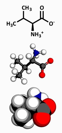 nitrogen: Valine  Val, V  amino acid, molecular model  Amino acids are the building blocks of all proteins  Atoms are represented as spheres with conventional color coding  hydrogen  white , carbon  grey , oxygen  red , nitrogen  blue  Illustration