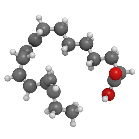 unsaturated: Omega-3 unsaturated fatty acid (alpha-linolenic acid), molecular model. Atoms are represented as spheres with conventional color coding: hydrogen (white), carbon (grey), oxygen (red)