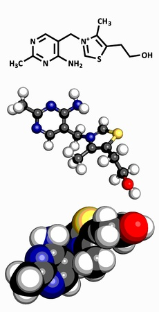 encephalopathy: Vitamin B1  thiamine , molecular model  Atoms are represented as spheres with conventional color coding  hydrogen  white , carbon  grey , oxygen  red , sulfur  yellow , nitrogen  blue