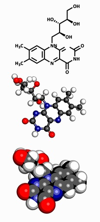 riboflavin: Vitamin B2  riboflavin , molecular model  Atoms are represented as spheres with conventional color coding  hydrogen  white , carbon  grey , oxygen  red  Illustration