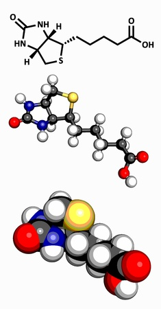 biotin: Vitamin B7  biotin , molecular model  Atoms are represented as spheres with conventional color coding  hydrogen  white , carbon  grey , oxygen  red , sulfur  yellow , nitrogen  blue