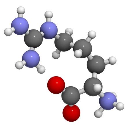 Arginine (Arg, R) aminozuur moleculair model. Aminozuren zijn de bouwstenen van alle eiwitten. Stockfoto