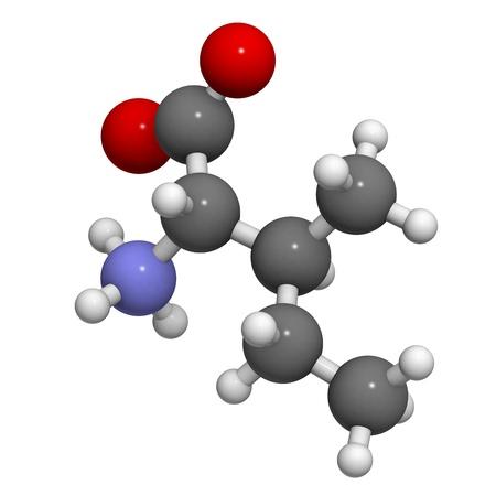 biosynthesis: Isoleucine (Ile, I) amino acid, molecular model. Amino acids are the building blocks of all proteins.