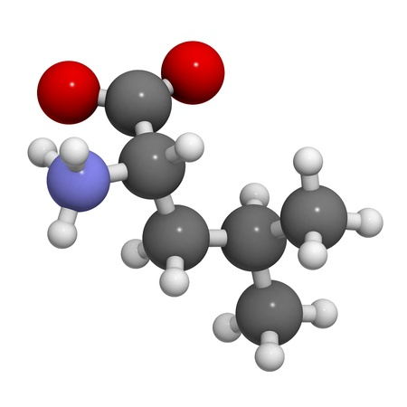 biosynthesis: Leucine (Leu, L) amino acid, molecular model. Amino acids are the building blocks of all proteins. Atoms are represented as spheres with conventional color coding: hydrogen (white), carbon (grey), oxygen (red), nitrogen (blue)