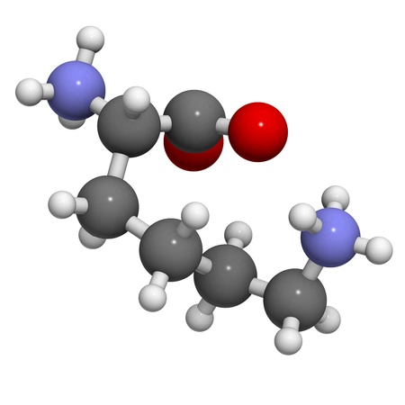 biosynthesis: Lysine (Lys, K) amino acid, molecular model. Amino acids are the building blocks of all proteins. Atoms are represented as spheres with conventional color coding: hydrogen (white), carbon (grey), oxygen (red), nitrogen (blue) Stock Photo