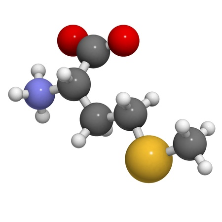 Methionine (Met, M) amino acid, molecular model. Amino acids are the building blocks of all proteins. Atoms are represented as spheres with conventional color coding: hydrogen (white), carbon (grey), oxygen (red), nitrogen (blue), sulfur (yellow) photo