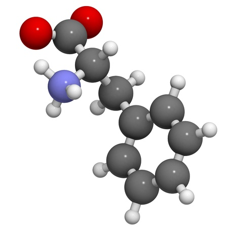 Phenylalanine (Phe, F) amino acid, molecular model. Amino acids are the building blocks of all proteins. Atoms are represented as spheres with conventional color coding: hydrogen (white), carbon (grey), oxygen (red), nitrogen (blue) photo