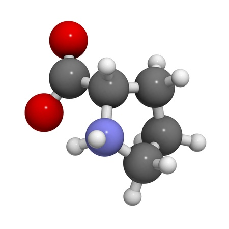proline: Proline (Pro, P) amino acid, molecular model. Amino acids are the building blocks of all proteins. Atoms are represented as spheres with conventional color coding: hydrogen (white), carbon (grey), oxygen (red), nitrogen (blue)