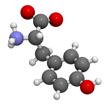 Tyrosine (Tyr, Y) amino acid, molecular model. Amino acids are the building blocks of all proteins. Atoms are represented as spheres with conventional color coding: hydrogen (white), carbon (grey), oxygen (red), nitrogen (blue) Stockfoto