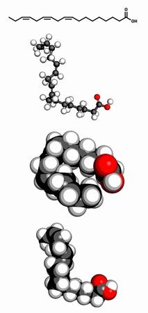 representations: Omega-3 �cido graso insaturado (�cido alfa-linol�nico), el modelo molecular. Tres representaciones 2D: F�rmula del esqueleto, modelo 3D llenado de espacio y modelo 3D de bola y palo.
