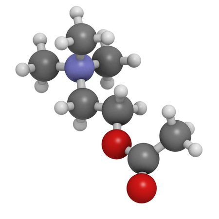 acetylcholine: Acetylcholine (ACh) neurotransmitter, molecular model. Atoms are represented as spheres with conventional color coding: hydrogen (white), carbon (grey), oxygen (red), nitrogen (blue) Stock Photo