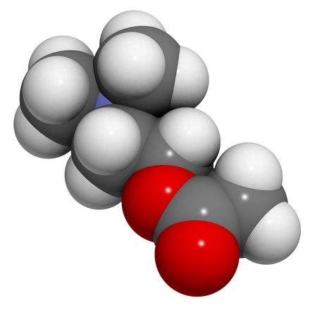 Acetylcholine (ACh) neurotransmitter, molecular model. Atoms are represented as spheres with conventional color coding: hydrogen (white), carbon (grey), oxygen (red), nitrogen (blue) Stock Photo - 18805927