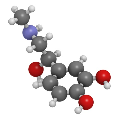 neurotransmitter: Adrenaline (epinephrine) hormone and neurotransmitter, molecular model. Atoms are represented as spheres with conventional color coding: hydrogen (white), carbon (grey), oxygen (red), nitrogen (blue) Stock Photo