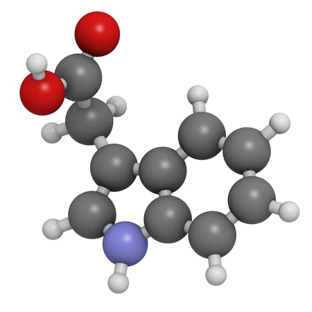 modulator: Auxin (indole-3-acetic acid, IAA) plant growth hormone, molecular model. Atoms are represented as spheres with conventional color coding: hydrogen (white), carbon (grey), oxygen (red), nitrogen (blue).