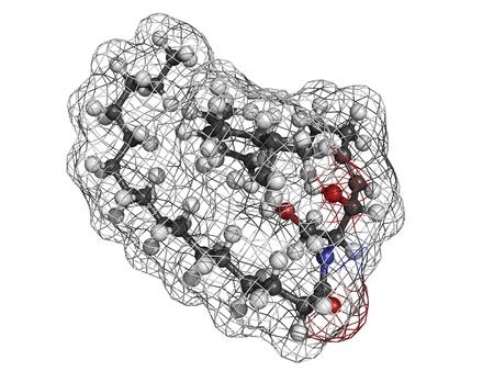 membrane cellulaire: C�ramide membrane lipidique cellulaire, mod�le mol�culaire. Les atomes sont repr�sent�s par des sph�res avec codage couleur classiques: l'hydrog�ne (blanc), le carbone (gris), d'oxyg�ne (rouge), l'azote (en bleu).