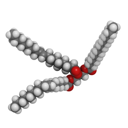 Trans-fat containing triglyceride (elaidyl stearyl oleyl triglyceride), molecular model. Atoms are represented as spheres with conventional color coding: hydrogen (white), carbon (grey), oxygen (red) photo