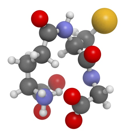 compounds: Glutathione antioxidant, molecular model. Atoms are represented as spheres with conventional color coding: hydrogen (white), carbon (grey), oxygen (red), nitrogen (blue), sulfur (yellow)