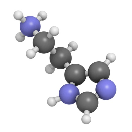 neurotransmitter: Histamine neurotransmitter, molecular model. Atoms are represented as spheres with conventional color coding: hydrogen (white), carbon (grey), nitrogen (blue) Stock Photo