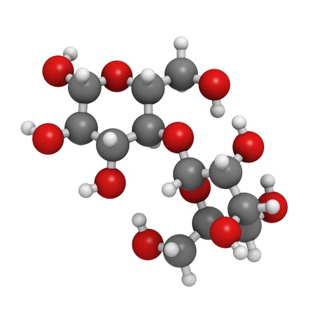 disaccharide: Maltose (maltobiose, malt sugar), molecular model. Atoms are represented as spheres with conventional color coding: hydrogen (white), carbon (grey), oxygen (red)