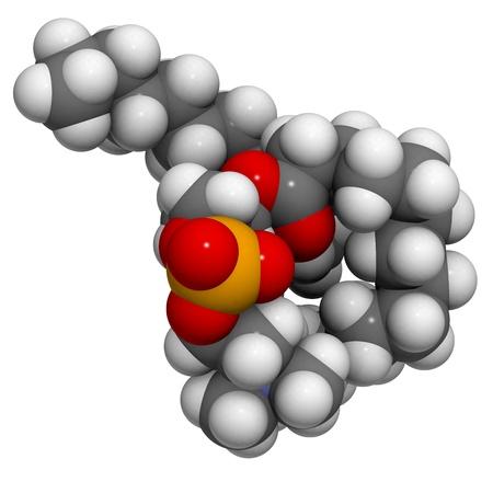 membrane cellulaire: Phosphatidylcholine (PC) bloc de construction de la membrane cellulaire, mod�le mol�culaire. PC est �galement le principal composant de la l�cithine. Les atomes sont repr�sent�s par des sph�res avec codage couleur classiques: l'hydrog�ne (blanc), le carbone (gris), d'oxyg�ne (rouge), le phosphore (orange), nitrog