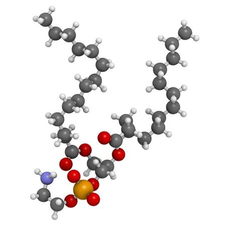 membrane cellulaire: Phosphatidyl�thanolamine bloc (PE) des cellules � membrane du b�timent, le mod�le mol�culaire. PE est �galement important dans la coagulation du sang (coagulation). Les atomes sont repr�sent�s par des sph�res avec codage couleur classiques: l'hydrog�ne (blanc), le carbone (gris), d'oxyg�ne (rouge), l'azote (bl