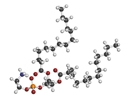 cell membrane: Phosphatidylethanolamine (PE) cell membrane building block, molecular model. PE is also important in blood clotting (coagulation). Atoms are represented as spheres with conventional color coding: hydrogen (white), carbon (grey), oxygen (red), nitrogen (bl Stock Photo