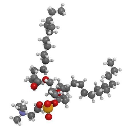 membrane cellulaire: Palmitoyloleoylphosphatidylcholine (POPC) bloc de construction de la membrane cellulaire, mod�le mol�culaire. Les atomes sont repr�sent�s par des sph�res avec codage couleur classiques: l'hydrog�ne (blanc), le carbone (gris), d'oxyg�ne (rouge), l'azote (en bleu), le phosphore (orange).
