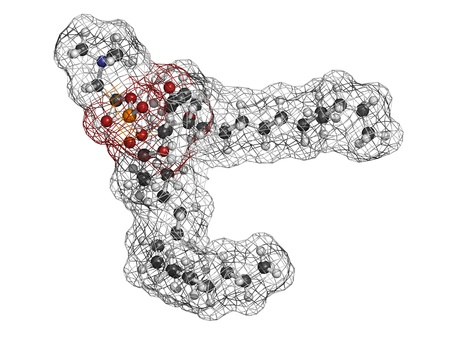 cell membrane: Palmitoyloleoylphosphatidylcholine (POPC) cell membrane building block, molecular model. Atoms are represented as spheres with conventional color coding: hydrogen (white), carbon (grey), oxygen (red), nitrogen (blue), phosphorus (orange).