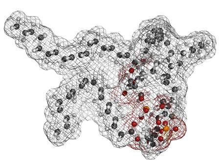 apoptosis: Cardiolipin (tetraoleoylcardiolipin) mitochondrial membrane lipid, molecular model. Atoms are represented as spheres with conventional color coding: hydrogen (white), carbon (grey), oxygen (red), phosphorus (orange)