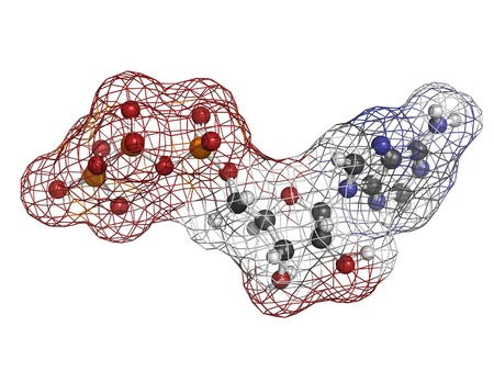 triphosphate: Adenosine triphosphate (ATP) energy transport molecule, chemical structure. ATP is the main energy transport molecule in most organisms. Atoms are represented as spheres with conventional color coding: hydrogen (white), carbon (grey), oxygen (red), nitrog
